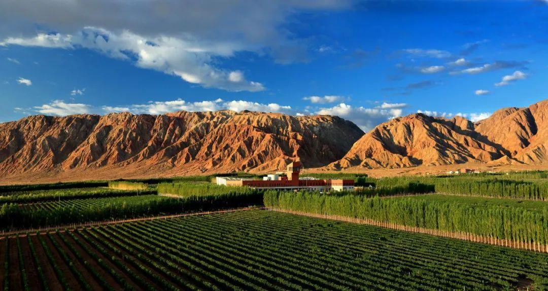天塞酒庄 天塞首秀春糖,以高品质、大品牌、强声势向世界展示新疆力量
